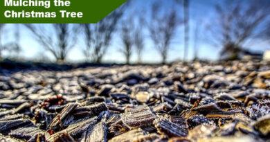 Compost a Christmas Tree